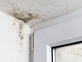 Mould Removal